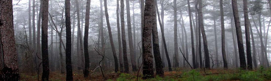 forestheader